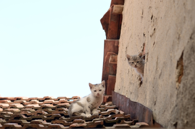 Kittens on the Roof